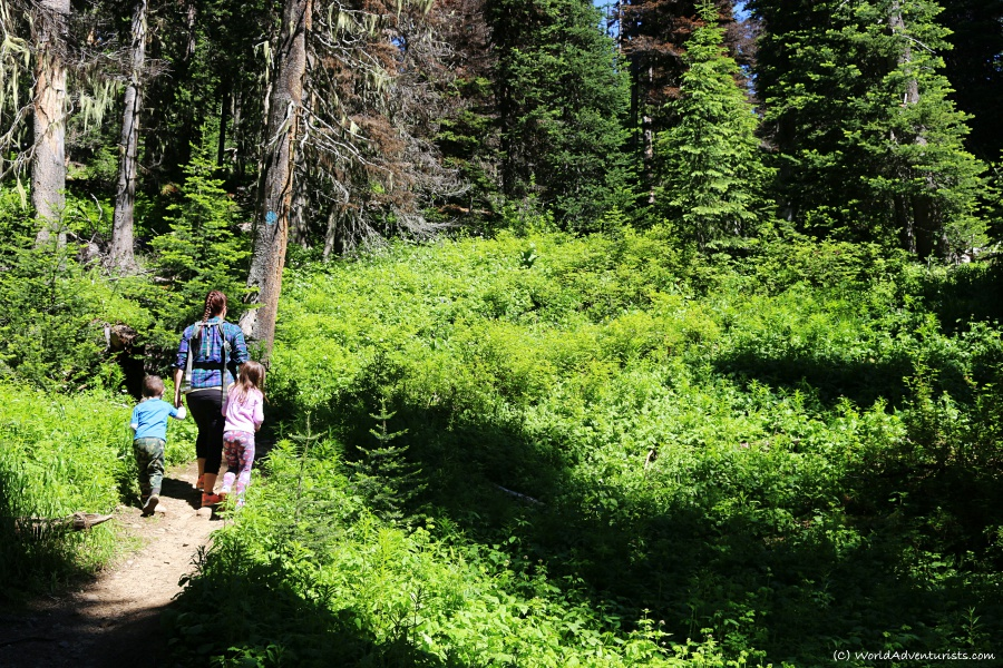 Family hiking Trophy Mountain Trail in Wells Gray Provincial Park