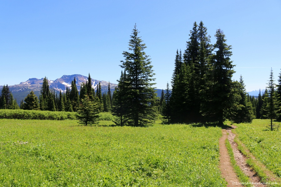 Trophy Mountain Trail views in Wells Gray Provincial Park