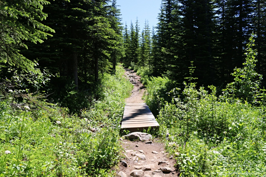 Trophy Mountain Trail in Wells Gray Provincial Park
