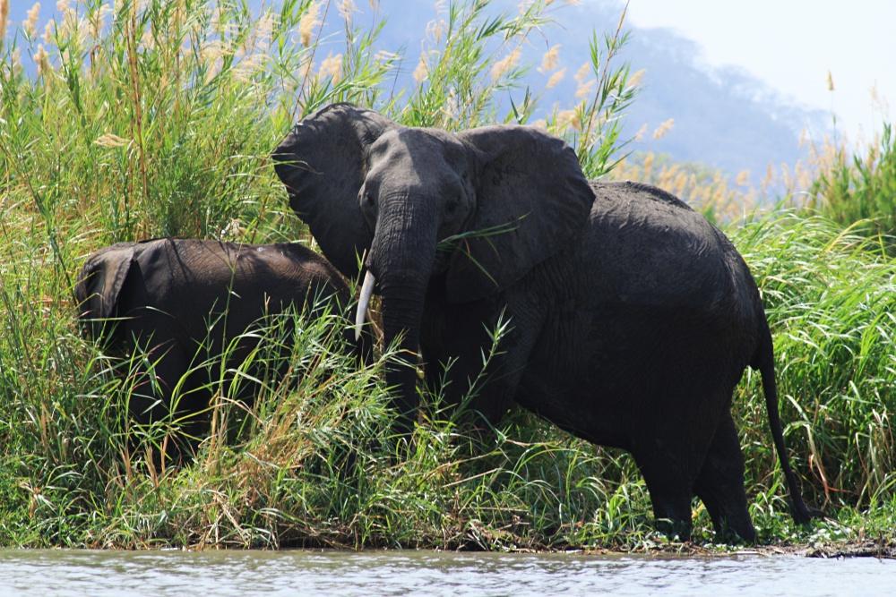 Incredible safari moments
