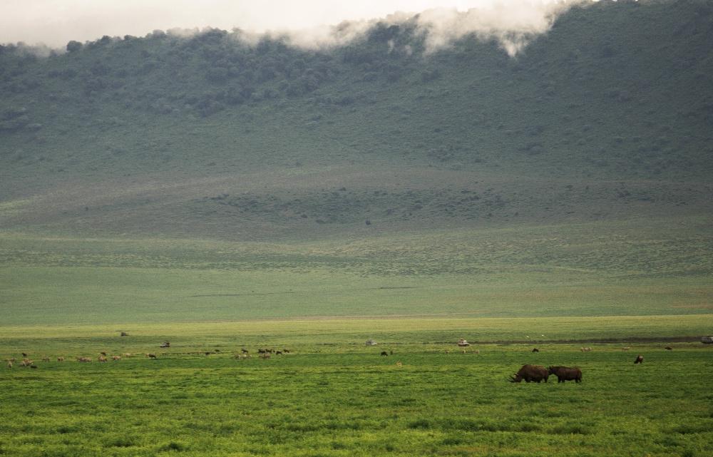 black rhinos in the Ngorongoro Crater