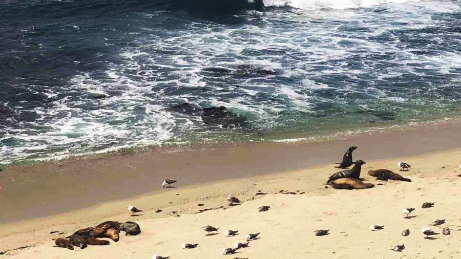favourite travel destinations - San Diego