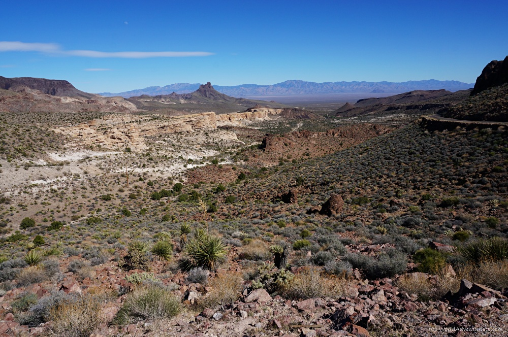 the drive to Oatman